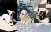 รวมภาพน้องหมาสังเคราะห์แสง อาบแดดฟินสุด ๆ
