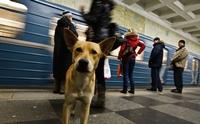 จัดอันดับ 5 ประเทศที่มีน้องหมาจรเยอะที่สุดในโลก