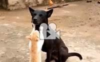Cat massage นี่มันบริการนวดหน้าระดับ 5 ดาวเลยนะเนี่ย !