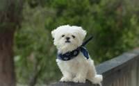 5 เทคนิคอัพเกรดน้องหมาจรฯ ให้เป็นหมาคุณหนูสุดเป๊ะ