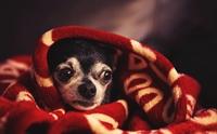 4 สิ่งที่คิดไม่ถึงว่าจะเกิดขึ้นกับน้องหมาในคืนวันลอยกระทง