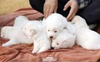 น่ารักยกครอก! ผู้นำเกาหลีใต้อวด 6 ลูกหมาตัวจิ๋วเชื่อมไมตรีจากคิม