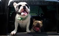 คู่มือดูแลน้องหมาเมารถ พร้อมวิธีป้องกันแบบง่าย ๆ ที่เจ้าของต้องรู้ !