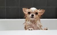 5 วีรกรรมสุดแสบที่เจ้าของน้องหมาเจอตอนอาบน้ำ