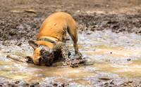 งงป่ะ ... ทำไมน้องหมาชอบเล่นน้ำ แต่ไม่ชอบอาบน้ำ!?