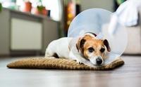คู่มือดูแลน้องหมาหลังผ่าตัดทำหมัน ฉบับ Dogilike