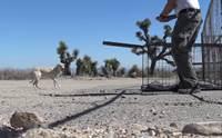 พบลาบราดอร์ถูกทิ้งกลางทะเลทราย จนท.ช่วยชีวิตจนปลอดภัย!