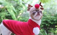 รวมภาพน้องหมากับคอสตูมสุดคิ้วท์ในวันคริสมาสต์