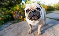 จัดอันดับ 5 พรที่อยากขอให้น้องหมาในปี 2019