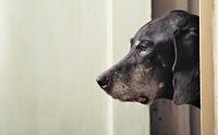สุนัขแบบไหนเสี่ยงป่วยเป็นโรคไตวาย
