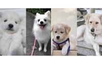 อวดภาพน้องหมาตอนเด็ก มาดูกันว่าใครจะน่ารักสุด!