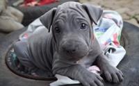 จัดอันดับ 5 พันธุ์น้องหมาที่เกิดมาก็หน้าโกงอายุไปไกล !