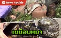 สยอง! งูเหลือม 4 เมตรซ่อนตัวในสวนหลังบ้านเขมืบน้องหมาเรียบ