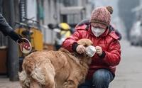 ต้องรอด! ... 6 วิธีพาน้องหมาเอาตัวรอดจากอันตรายฝุ่นควันพิษ