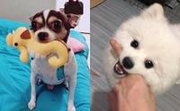 รวมภาพน้องหมาสายฮา ชอบคาบของประหลาดมาอวด!