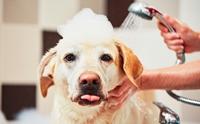 4 Tips โกงอายุน้องหมาให้ดูเด็กตลอดเวลา