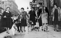 ย้อนรอย 100 ปี สุนัขกับหน้ากากป้องกันมลพิษ (รูปเยอะ)