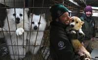 ทัวโลกซึ้ง! ปฏิบัติการช่วยหมา 200 ตัวรอดถูกเชือดในเกาหลี