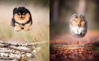 หมาบิน! เผยเซ็ตภาพสวยที่จะทำให้คนรักสุนัขมีรอยยิ้ม