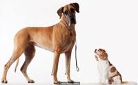 สุนัขพันธุ์ใหญ่หรือพันธุ์เล็ก พันธุ์ไหนเป็นสุนัขที่ฉลาดกว่า