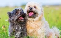 4 tips ง่ายๆ ดูแลฟันน้องหมาให้ขาวปิ๊ง ไร้กลิ่นปาก !