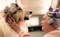 จริงหรือไม่! สุนัขมีพฤติกรรมเปลี่ยนแปลงเป็นเหมือนกับคนเลี้ยงได้