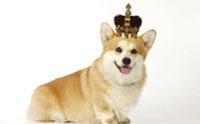 จัดอันดับ 5 สายพันธุ์น้องหมาโปรไฟล์สุดไฮโซ