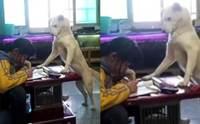 พ่อชาวจีนฝึกตูบให้เฝ้าลูกสาวทำการบ้าน ไม่เขวจับมือถือเล่น!
