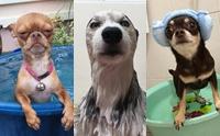 รวมภาพสุดฮา ... เมื่อน้องหมาโดนจับอาบน้ำ