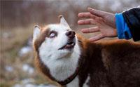 จัดอันดับ 5 เทคนิคผูกมิตรกับน้องหมาแปลกหน้า (แบบไม่ให้น้องหมากลัวเรา)