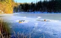 ฮีโร! หนุ่มกับตูบคู่ใจลุยทะเลสาบน้ำแข็งช่วย 2 สุนัขตกน้ำ
