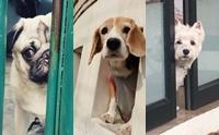 รวมภาพสุดฮาน้องหมาจอมเจ๋อ เผือกเก่ง!!!