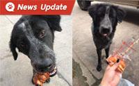 ให้อาหารหมาหน้าเซเว่นนาน 5 เดือน สุดท้ายเป็นหมาเจ้าของเซเว่น