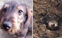 ตูบหายจากบ้าน 4 วัน พบอีกทีติดอยู่ในโพรงกระต่าย !
