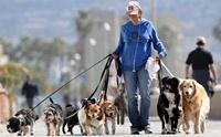 5 อาชีพสุดแนวเอาใจคนรักสุนัข