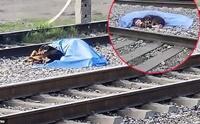 ตูบซื่อสัตย์เฝ้าศพเจ้านายกลางรางรถไฟ ปกป้องไม่ให้ใครเข้าใกล้!