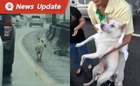 เอาใจไปเลย! ผู้ใช้ทางพร้อมใจช่วยน้องหมาวิ่งบนทางด่วนบางพลี-สุขสวัสดิ์