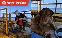 ระทึก ตามติดภารกิจช่วยเหลือน้องหมาลอยคอกลางทะเลห่างจากฝั่ง 220 กม.