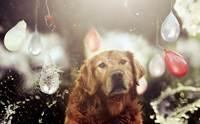 จัดอันดับ 5 สิ่งอันตราย ห้ามทำกับน้องหมาในช่วงสงกรานต์