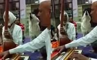 ตูบแสนรู้ร่วมวงร้องเพลงกับวงดนตรีในอินเดีย มาบ่อยจนผู้คนเอ็นดู!