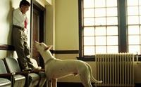 Cynophobia คนกลัวสุนัข ไม่ใช่เรื่องแปลก
