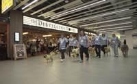 ครั้งแรก! สนามบินอังกฤษเปิดตัวแก๊งน้องหมา ทำหน้าที่ลดเครียดก่อนขึ้นเครื่อง