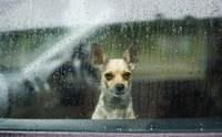 จัดอันดับ 5 สิ่งที่ไม่ดีต่อใจน้องหมาในหน้าฝน !