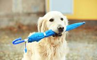 จัดอันดับ 5 ไอเทมดีต่อใจ ช่วยน้องหมาไร้กลิ่นตัวในหน้าฝน !