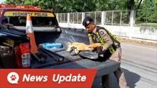 ชาวเน็ตชื่นชม! ตร.ทางหลวงฮีโรช่วยชีวิตสุนัขจรจัดถูกรถชน