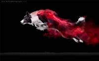 อลังการ! ช่างภาพแคนาดาเผยภาพน้องหมากับผงแป้งหลากสี