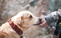 วัคซีนพิษสุนัขบ้ารูปแบบกิน ช่วยป้องกันโรคในสุนัขได้จริงหรือ ?
