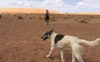 ขวัญใจนักวิ่ง! ตูบสุดอึดร่วมวิ่งมาราธอนในทะเลทรายซาฮารา