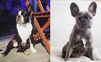 จัดอันดับ 5 คู่สายพันธุ์น้องหมาหน้าแฝด จนคิดว่าเป็นพันธุ์เดียวกัน