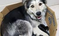 สงสาร! พบแม่หมาพร้อมลูก 9 ตัว ถูกทิ้งในกล่องกระดาษปิดผนึก